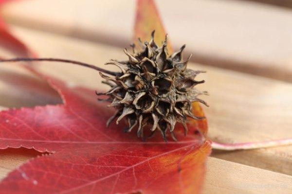 ball.leaf